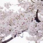 花見・上野
