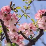 花見・鎌倉