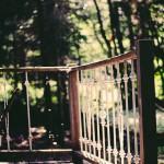 森の日差し